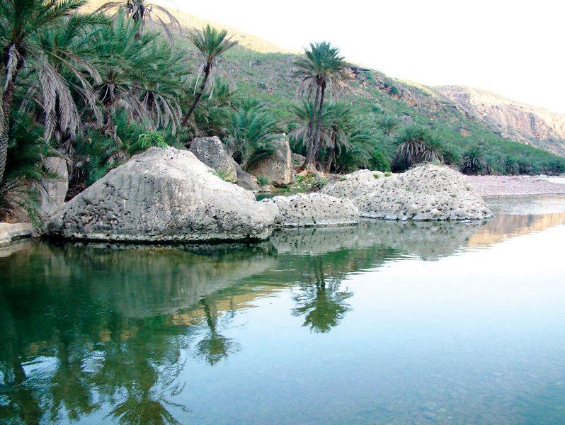 سقطرى اليمنية متحف نباتي الاقتصادي سياحة وسفر البيان